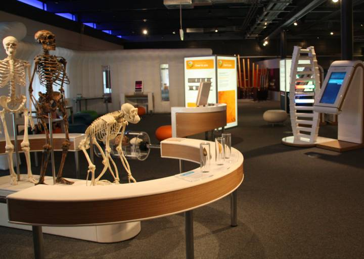 iDNA skeletons and J interactive exhibits.jpg