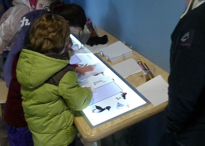 tralee bay wetlands centre bird tracing exhibit.jpg