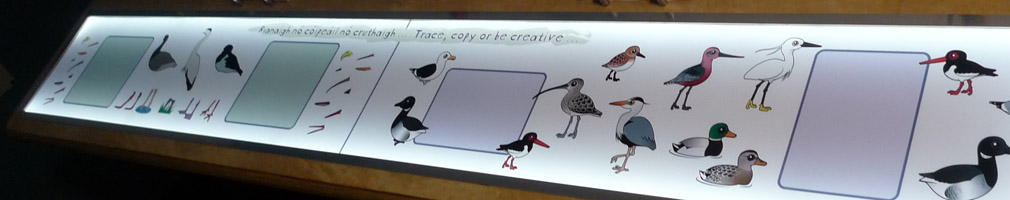 bird tracing drawing interactive table
